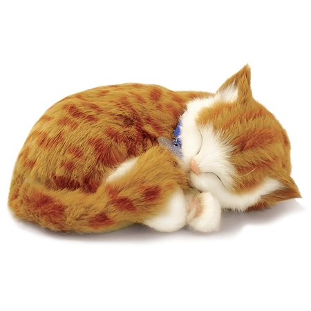 Purr-fect Pets Orange Tabby Cat