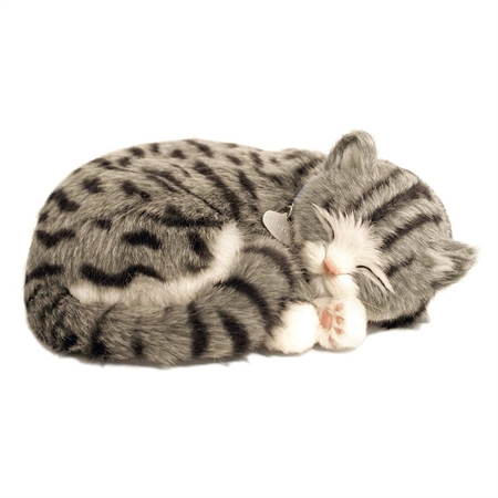 Purr-fect Pets Grey Tabby Cat