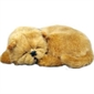 Purr-fect Pets Chow Chow - Thumbnail 1