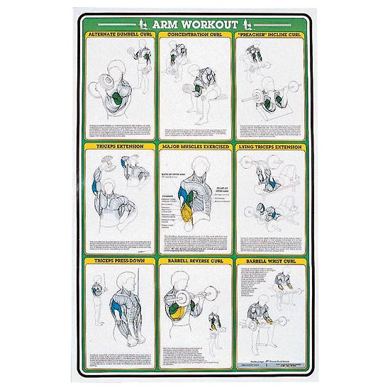 Self Instruction Weight Training Poster Arm Exercises Flaghouse