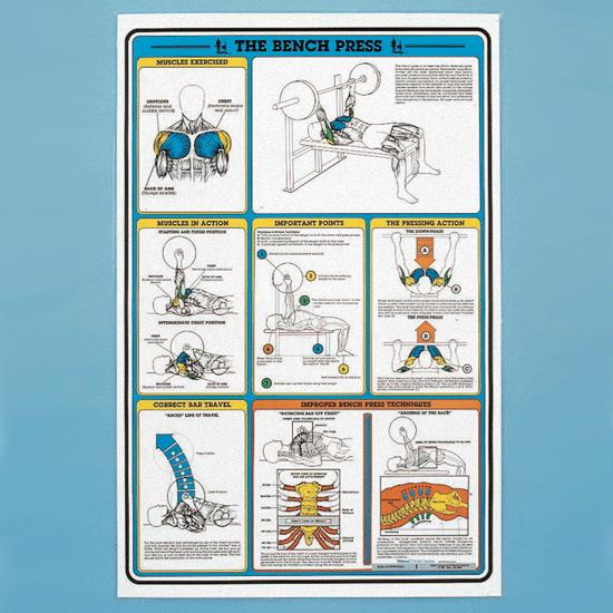 Self Instruction Weight Training Poster Bench Press Exercises